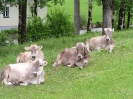 Tiere am Ferienhof